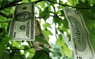 What if Money Does Grow on Trees?