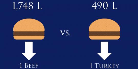 Beef vs. Turkey