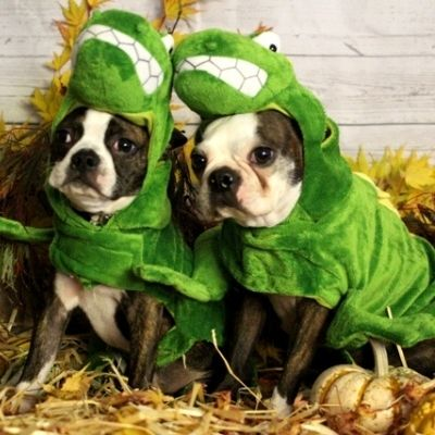 Sustainable and Safe Halloween Tips Costumes Pets