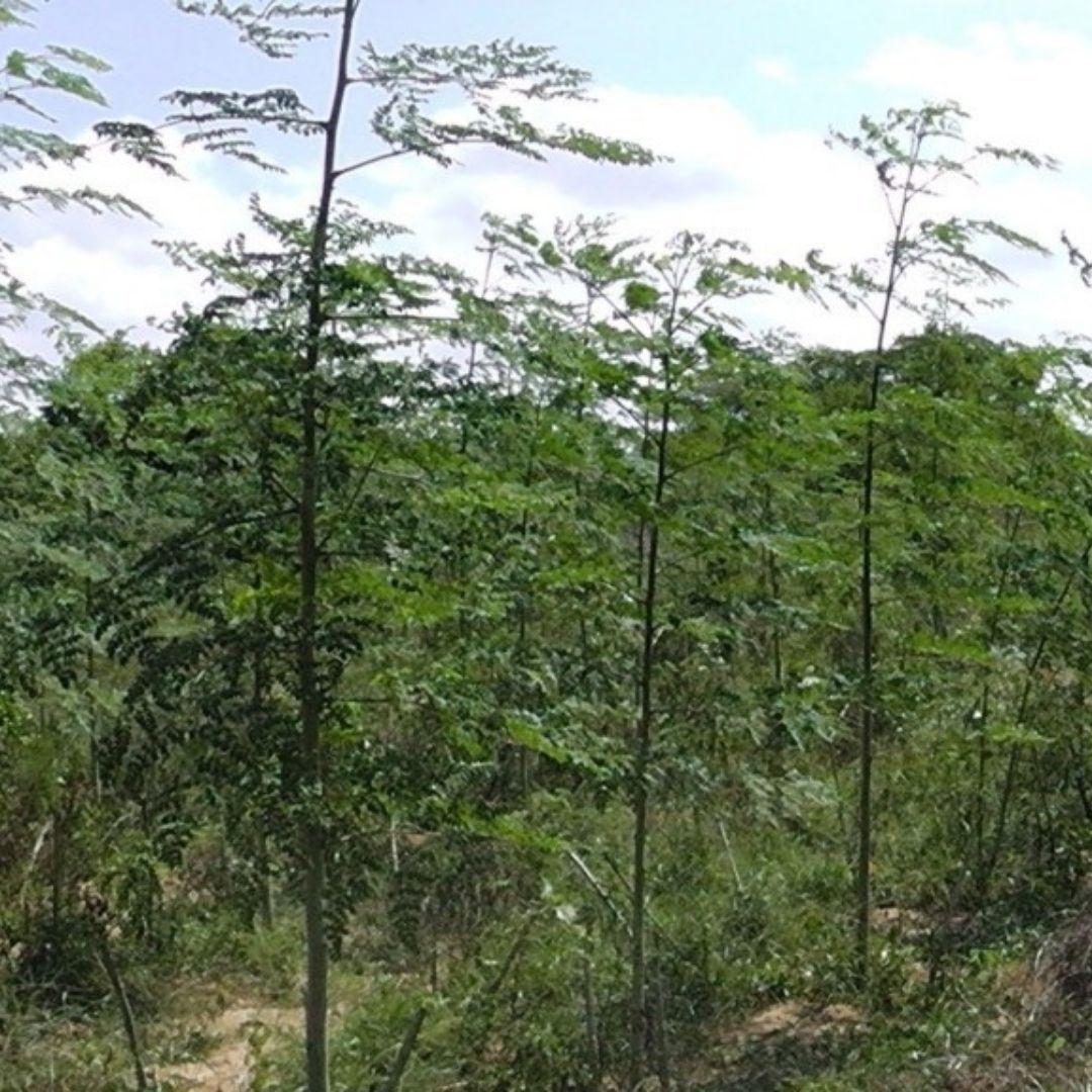 MeetGreen Forest